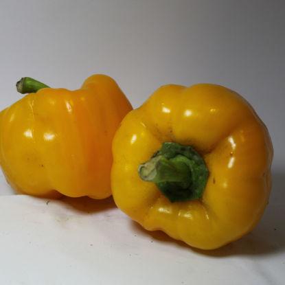 Peperoni gialli