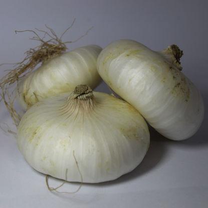 Cipolle bianche novelle